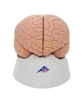Beyin Modeli, 2 Parçalı