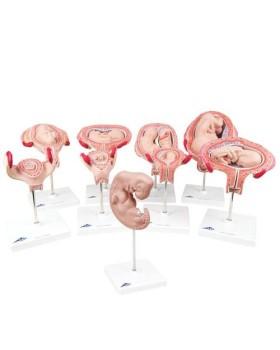 Hamilelik Serisi, 9 Model