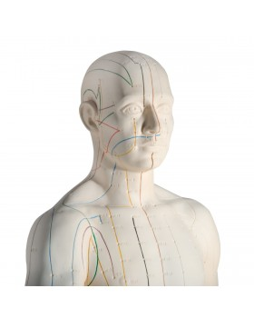Akupunktur Modeli, Erkek