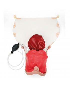 Doğum Sonrası Kanama (Postpartum Hemorrhage) Modülü