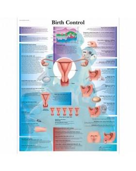 Doğum Kontrol Posteri