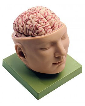Beyinli Kafa Tabanı Modeli
